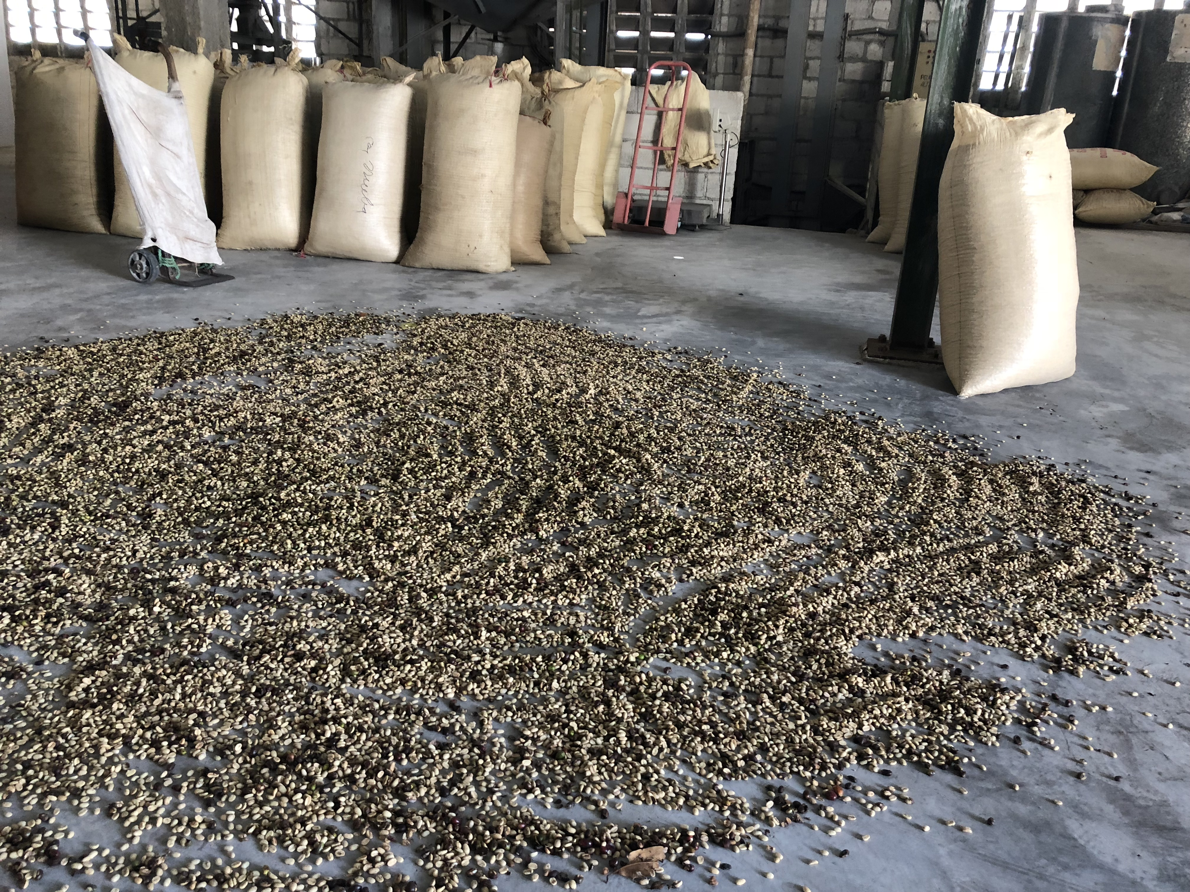 Wake Up and Smell the Indian Coffee: Overseas Lessons for Coffee Board of India