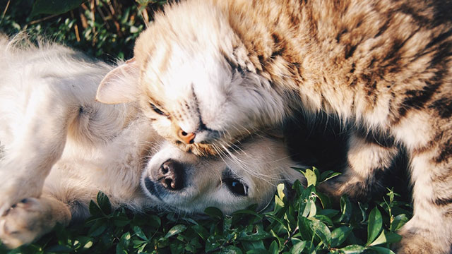 Pet Insurance Plans For Dogs and Cats in India: How Are We Catching Up?
